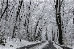 BEND IN THE ROAD, EAST ROCK PARK (susies.genii) Tags: trees winter snow scenery outdoor snowcovered winterscene newhavenct snowyafternoon plowedroad february52016 eastrockparkroad