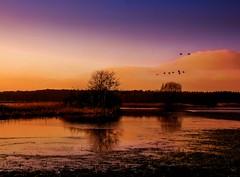 Hochwasser (pyrolim) Tags: world wonderful wasser himmel ufer vgel landschaft bume baum hochwasser wardersee pronstorf