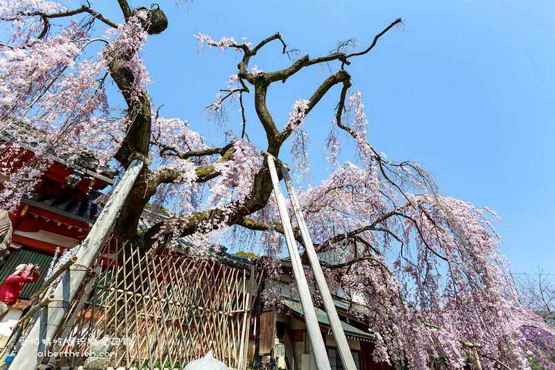 日本奈良櫻花.冰室神社