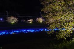 20160305-DSC_2210.jpg (d3_plus) Tags: street sea sky plant flower nature japan spring nikon scenery nightshot cloudy bloom  cherryblossom  sakura lightup nightview 28105mmf3545d nikkor    shizuoka    izu   28105   rapeblossom    28105mm  zoomlense  minamiizu    kawazuzakura    28105mmf3545 d700 281053545  nikond700 shimokamo aiafzoomnikkor28105mmf3545d nightcherryblossom 28105mmf3545af    southcherryblossomandrapeblossomfestival aiafnikkor28105mmf3545d shootingstarsandsakurainnight sakurainnight