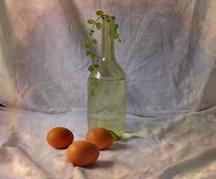 Still Life & Eggs (MargoLuc) Tags: light green texture window water glass leaves easter march three bottle soft natural eggs menta luned skeletalmess