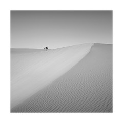 Quartz (Rohan Reilly Photography) Tags: tree square landscape sand dunes fuerteventura minimal canaries rohanreilly playasgrandes