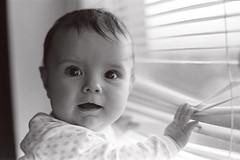 Nikon FE2 + Kodak Tri-x (mravcolev) Tags: light portrait blackandwhite bw film window girl analog child naturallight blinds kodaktrix analogue 135 ilford nikonfe2 id11 homedevelopment epsonperfectionv700