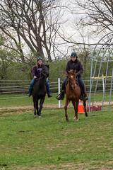 DSCF0327.jpg (Ed Traywick) Tags: horses horse leo robyn obstacles horseclinic