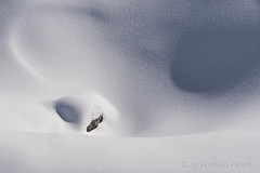 DSC07599_s (AndiP66) Tags: italien schnee winter italy snow mountains alps skiing sony it berge sp di if af alpen alpha tamron f28 ld sdtirol altoadige southtyrol 70200mm sulden solda ortles valvenosta northernitaly vinschgau skiferien ortler trentinoaltoadige skiholidays sonyalpha tamron70200 andreaspeters tamronspaf70200mmf28dildif 77m2 a77ii ilca77m2 77ii 77markii slta77ii