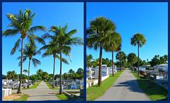Key West (Florida) Trip 2015 7373-7376 (edgarandron - Busy!) Tags: trees cemeteries tree cemetery keys florida keywest floridakeys keywestcemetery