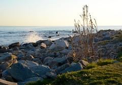Waves (Cranderson5) Tags: ocean statepark sunset island long waves jetty shoreline ducks ct sound newlondon harknesspark 41716