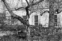 Gracie Mansion through prewar glass (Patrick Copley) Tags: leica nyc newyork manhattan uppereastside carlschurzpark leicam2 architecturalphotography graciemansion uncoatedlens federalistarchitecture summar50mmf20 prewarglass
