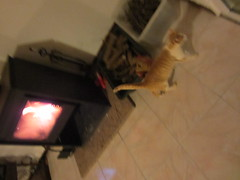 IMG_3891 (Chat Malicieux) Tags: cat blurry fireplace chat leo katze unscharf ofen