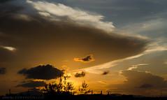 The Giant Cotton (LeoMuse747) Tags: trees sunset brazil cloud sun nature brasil clouds reflections lens landscapes amazing nikon artistic silhouettes scene palmtrees cotton fortaleza cear flare kit nikkor 70300mm vr ladscape jawdropping sungazing d5100 sungaze brasilemimagens leomuse747
