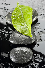 spa stones with water drops (Giy dn tng, Thm tri sn, Sn nh) Tags: life white black nature water beauty stone relax leaf still healthy bath asia soft hungary meditate natural body spirit earth drop fresh minimal medical health zen elements massage medicine treat recreation therapy bathing care relaxation intimate healing stress pure spa decorate healthcare luxury alternative aroma wellness treatment aromatherapy therapist skincare