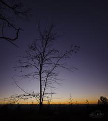 Purple rain (michelangelo_84) Tags: wood sunset sky espaa naturaleza tree nature night forest 35mm atardecer golden noche spain nikon purple time dusk amarillo bosque cielo hour lavander violeta dorado oro lavanda larioja morado d5100