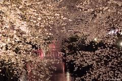 Tokyo Spring at full bloom (Shubhashish Chakrabarty) Tags: japan tokyo spring asia 桜 日本 東京 meguro nakameguro 春 花見 目黒川