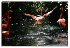 Oasi-S.Alessio-25-04-2016_013 (fdpdesign) Tags: italy macro nature nikon natura animali d800 pavia oasi 2016 salessio nikon105micro
