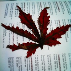 Red leaf  #leaf #instagram (Juliana R2) Tags: red nature square leaf lofi squareformat iphoneography instagramapp uploaded:by=instagram