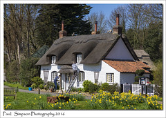 Chocolate Box Cottage (Paul Simpson Photography) Tags: flowers england house home nature sunshine rural photography photo spring whitehouse cottage picture bluesky decorating naturalworld daffodils appleby chocolatebox thatchedcottage villagelife ruralengland northlincolnshire photosof photoof southhumberside paintingahouse sonya77 paulsimpsonphotography ruralbritian april2016