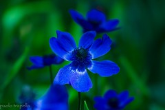 fiori (paolotrapella) Tags: flowers verde canon garden fiori tamron vc giardino 70300 eos600d