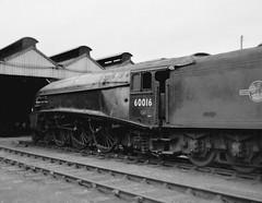 Gresley A4 60016 Silver King at Perth shed (63A)  1965 (rac819) Tags: steam railways britishrailways steamlocomotives uksteam brsteam