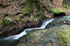 (zsolt75) Tags: nature creek forest spring hungary 1855 canon100d