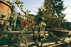 #Chaenomeles japonica #Bonsai (rO bert) Tags: bonsai chaenomeles