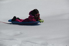 Jovie with her sled 3 (Aggiewelshes) Tags: travel winter snow april snowshoeing wyoming sled jacksonhole colterbay jovie grandtetonnationalpark 2016 gtnp