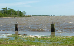 Parallel perches (Monceau) Tags: seagulls flooding perched mandeville posts parallel highwater lakefront odc perches