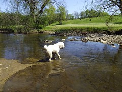 Zeus Finally Gets His Feet Wet! (EX22218) Tags: trees dog dogs nature water swimming rocks flickr earth kentucky mostinteresting louisville cherokee senecapark flickrsbest fiveprime louisvillemetroparks