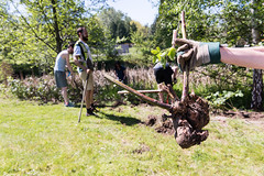 16067_0420-1652.jpg (BCIT Photography) Tags: blackberry bcit sustainability invasivespecies himalayanblackberry greenteam guichoncreek bcinstittuteoftechnology earthday2016