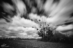 Burghill Orchard Long Exposure (Aaron_Bennett) Tags: longexposure blackandwhite nature landscape fuji farm orchard fujifilm fuj hereford burghill nd110 aaronbennett 10stops vsco vscofilm fujixt1 xf1024mm