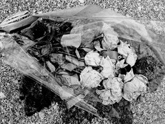 Easter Roses (Broot - Thanks for a half million views!!) Tags: blackandwhite bw plant paris flower monochrome cemetery grave rose spring memorial mourning tomb offering april tribute montparnasse grief