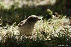 _DSC0408 (chris30300) Tags: france heron de pont parc oiseau camargue gau saintesmariesdelamer flamant provencealpesctedazur ornithologique