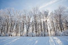 Treeline (Zack Mensinger) Tags: winter minnesota eos midwest frost hoarfrost 2016 westernminnesota canon5dmarkii