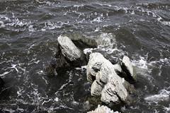 Turtle Head, Islesboro, ME (Erica Robyn) Tags: ocean new england beach nature maine coastal ledges islesboro islesboromaine