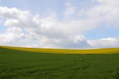 Rape field (Xtraphoto) Tags: green field yellow landscape horizon feld felder rape minimal gelb grn landschaft raps horizont rapsfeld minimalismus