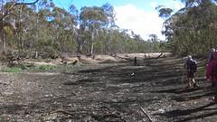 Para Wirra 19 (WEA Ramblers) Tags: hiking australia bushwalking southaustralia parawirra yattalunga fayharding