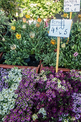 20160424 Provence, France 02603 (R H Kamen) Tags: flowers plants france retail market choice pricetag alyssum marketstall vaucluse carpentras provencealpesctedazur westernscript rhkamen