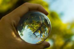 Pritu  // Tierra (Eric Art Alexandre) Tags: wild tree nature ball arbol earth elements tierra esfera sphera wildness pritui majbhutas