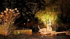 IMG_6262 (jalexartis) Tags: lighting nightphotography night dark landscaping nandina nandinadomestica