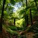 Tree ferns grove