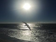 Sunset 3.0 (pineider) Tags: usa boobs florida titts topless naples