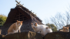 we've moved 2 (torne (where's my lens cap?)) Tags: japan cat d50 nikon