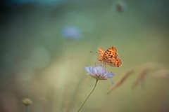 Natures Touch (icemanphotos) Tags: vintage butterfly bokeh relaxing calm zen magical