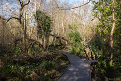 Moseley Bog (Jemma Graham) Tags: uk trees england woodland landscape birmingham woods britain path paths bog moseley moseleybog