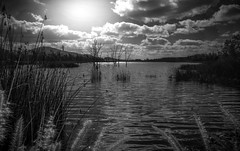 lake view (efrainsalvadorjr) Tags: california blackandwhite nature landscape natural sandiego carlzeiss biogon landscapephotography otaylakes lakescape sonyalpha biogon28mm blackandwhitepics blackandwhtiephotography sonyimages sonya7ii