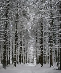 Bosque nevado (Fermin Pagola) Tags: nieve bosque invierno navarra urkiaga