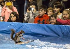 The Star of the Show! (suesthegrl) Tags: animal squirrel tricks waterskiing twiggy torontoboatshow boatshowto
