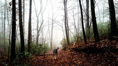 A Jaunt to the Creek (kristie1elise) Tags: trees dogs nature animals fog landscape scenery tennessee trails hike greenery
