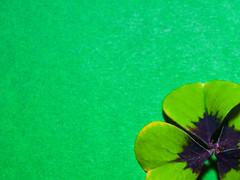 Ein bisschen Glck (ingrid eulenfan) Tags: macro green grn makro glcksklee glck kleeblatt minimalismus macromondays vibrantminimalism