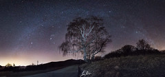 root in the ground , head high in the sky ! (Luca Famlonga) Tags: wood italy tree canon way landscape woods panoramic tuscany root milky milkyway astrophotograpy