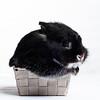 Cupcake Bunny (Jeric Santiago) Tags: pet rabbit bunny animal basket conejo lapin hase kaninchen うさぎ 兎 rabitbit